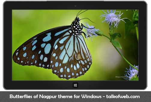 Butterflies of Nagpur