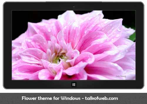 Flower Theme For Windows 8
